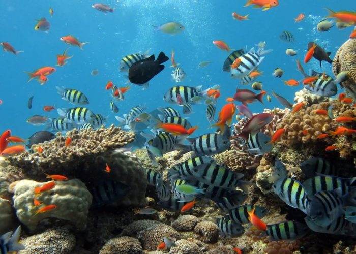 Tour câu cá lặn ngắm san hô